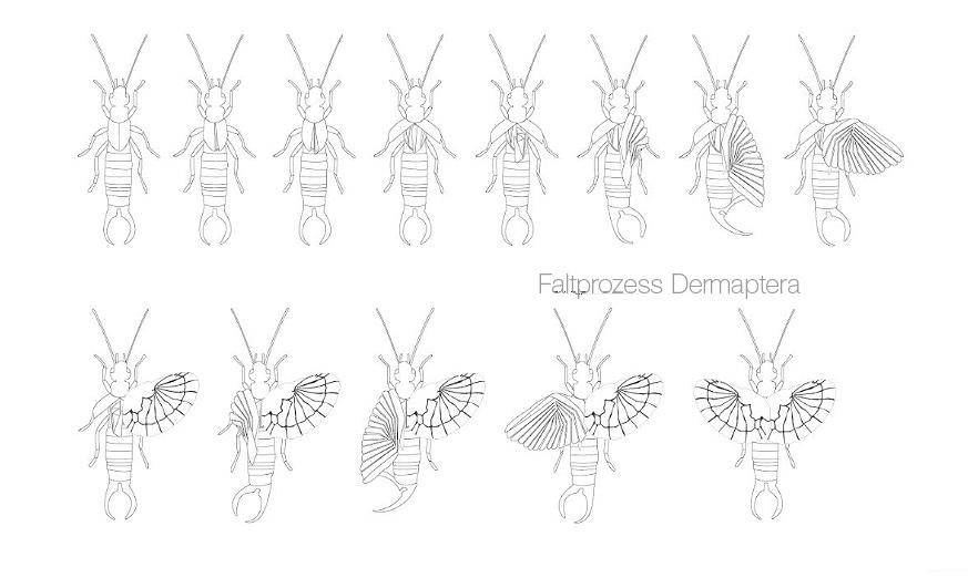 Faltprozess Dermaptera Bionik Design