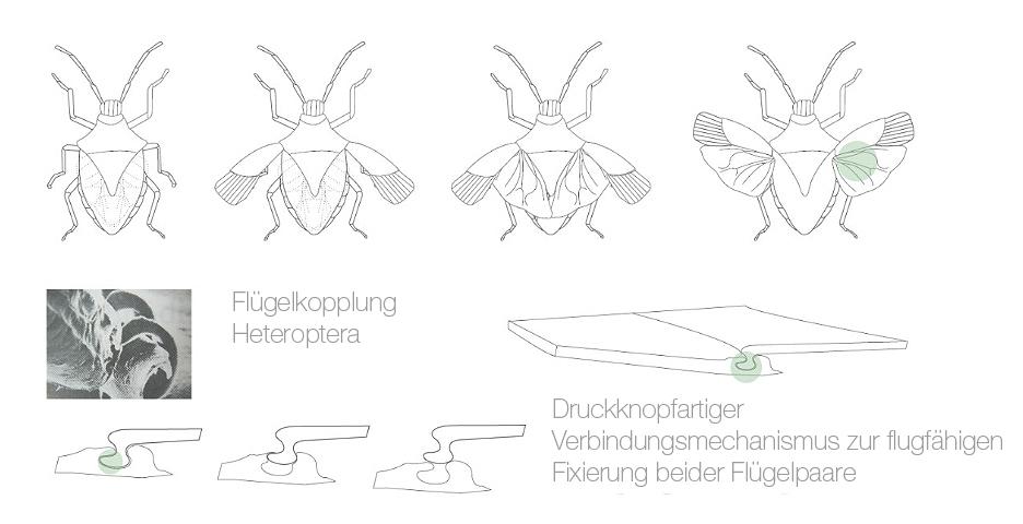 Flügelkopplung Heteroptera Verbindungsmechanismus Bionik Design