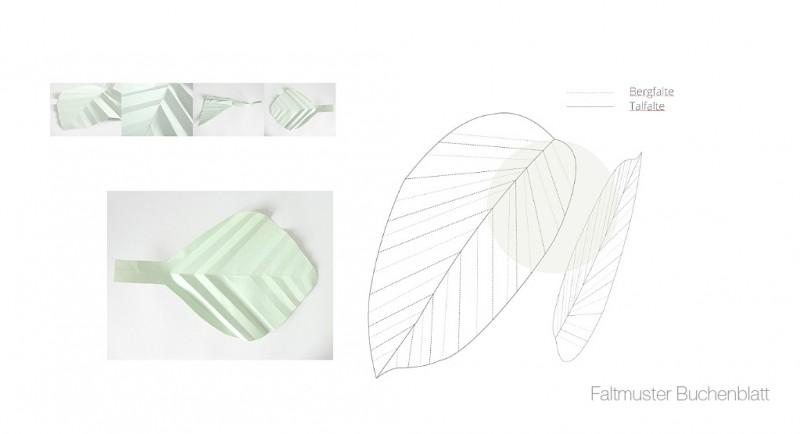 Faltmusteranalogie Buchenblatt Bionik Design